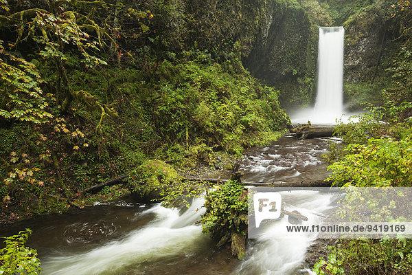 Wasserfall Wiesendanger Falls in der Columbia River Gorge Schlucht  Portland  Oregon  USA