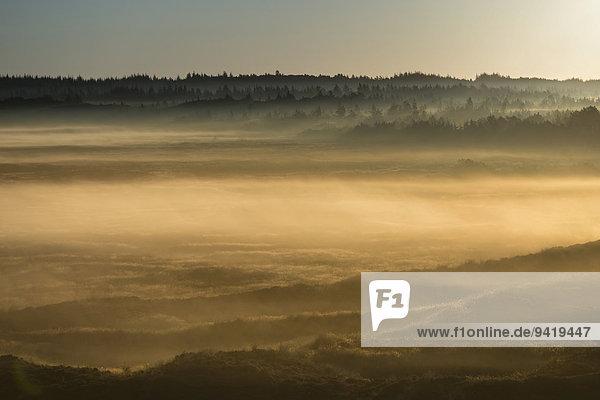 Nebel über Dünen und Heidelandschaft bei Sonnenaufgang  Henne  Region Syddanmark  Dänemark