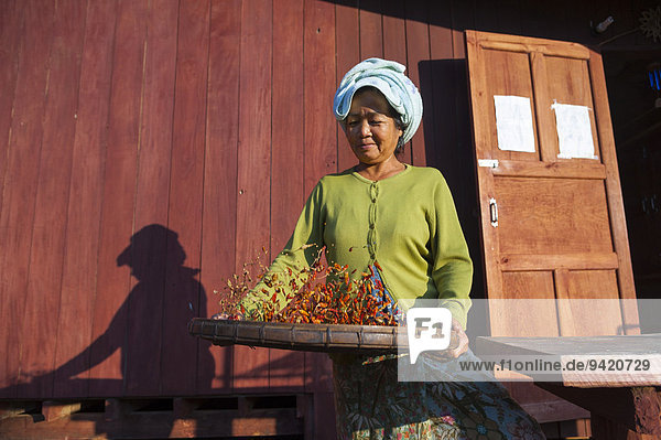 Woman from the Lahu people  hill tribe  ethnic minority  preparing red chillies for drying  Lahu village  Mae Hong Song Province  Northern Thailand  Thailand
