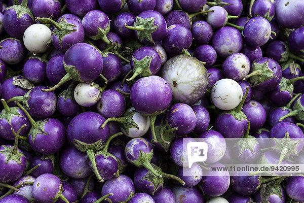 Auberginen (Solanum)  Myanmar