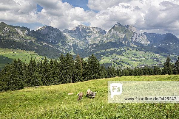 Ausblick vom Klangweg im Toggenburg auf den Alpstein mit Säntis  Wildhaus  Kanton St. Gallen  Schweiz