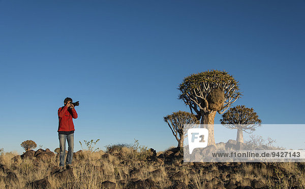 Woman taking photos of quiver trees  Karas Region  Namibia