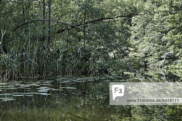 Havel  Mecklenburg-Vorpommern  Deutschland