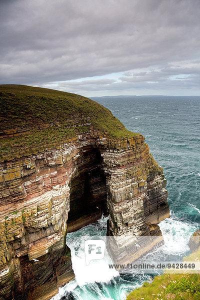 Brutplatz für viele Vögel an der Nordsee  Küste in Schottland  Großbritannien  Europa