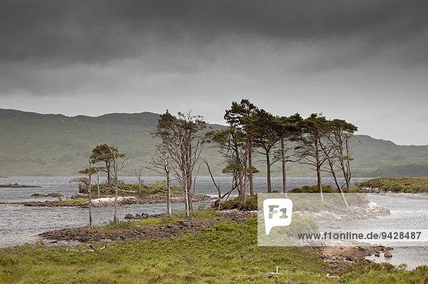 Little Assynt Estate in der Nähe von Loch Assynt  Schottland  Großbritannien  Europa