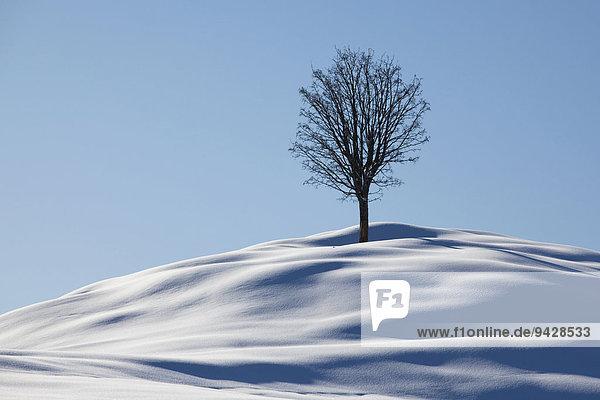 Einzelner Baum  Winterlandschaft im Alpstein mit Neuschnee  Appenzell  Schweiz  Europa