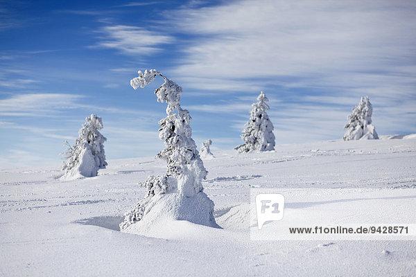Winterstimmung auf dem Feldberg im Schwarzwald  Baden-Württemberg  Deutschland  Europa