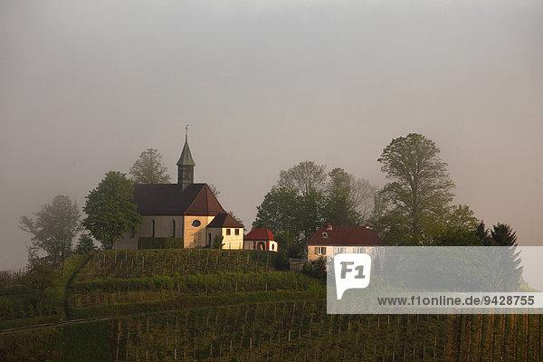 Jakobuskapelle im Morgenlicht und Frühnebel bei Gengenbach auf dem Bergle  Kinzigtal  Schwarzwald  Baden-Württemberg  Deutschland  Europa