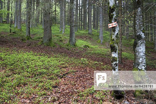 Wanderschild im Wald vom Kandelhöhenweg bei St. Peter  Schwarzwald  Baden-Württemberg  Deutschland  Europa
