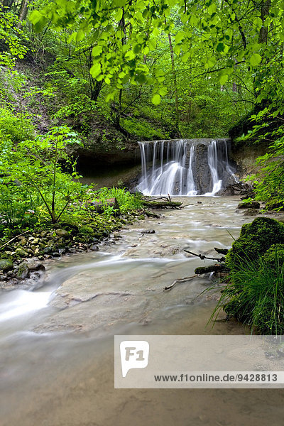 Der Giessen Wasserfall mit Nagelflugfels  Wil  Kanton St Gallen  Schweiz  Europa