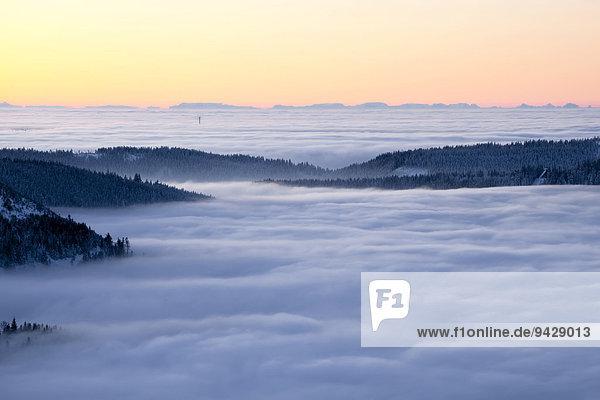 Über dem Hochnebel im Morgenlicht von der Hornisgrinde im Schwarzwald  Winterlicht mit Alpen und Fatamorgana  Luftspiegelung der Alpen  Baden-Württemberg  Deutschland  Europa