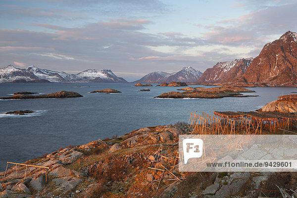 Trockengestelle mit Stockfisch  Henningsvaer  Lofoten  Norwegen  Europa  ÖffentlicherGrund