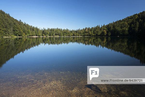 Feldsee mit Spiegelung an einem Spätsommertag  Feldberg  Schwarzwald  Baden-Württemberg  Deutschland  Europa