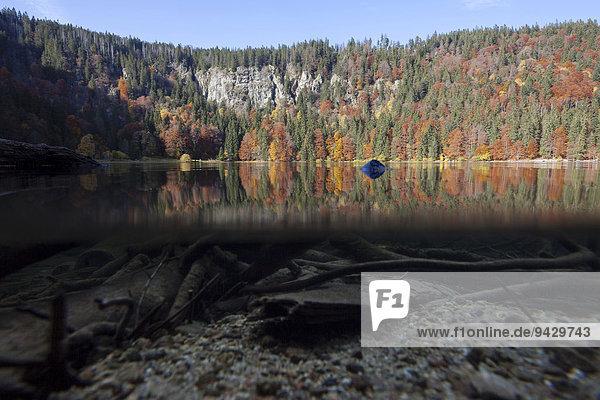 Halb-und-halb-Aufnahme vom Feldsee im Schwarzwald  Baden-Württemberg  Deutschland  Europa