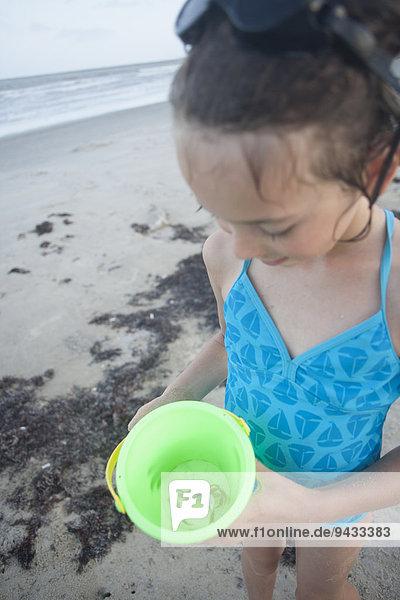 hoch oben Strand fangen halten Eimer Krabbe Krebs Krebse Mädchen