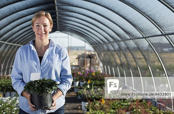 Portrait of mature female worker holding potted plant in plant nursery polytunnel