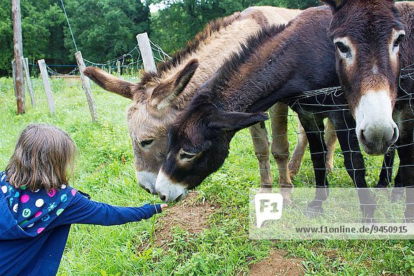 A young caucasian 8 years old pet and feed donkeys in a farmhouse in the Dordogne region in France