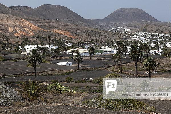 Ausblick auf Haria  Palmen  Lavafelder  hinten zwei Vulkanberge  Lanzarote  Kanarische Inseln  Spanien  Europa