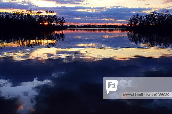 Abendstimmung am See mit Bäumen und Spiegelung der Wolken  Alpen-Menzelen  Nordrhein-Westfalen  Deutschland  Europa