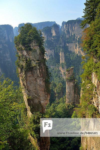 '''Avatar''-Berge mit Felsnadeln aus Quarzsandstein  Zhangjiajie Nationalpark  Provinz Hunan  China  Asien'
