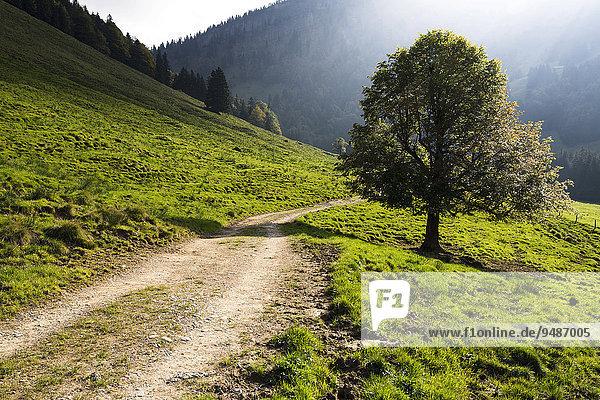 Herbststimmung  Gross Euchst Alm  Kronberg  Alpstein  Appenzell  Schweiz  Europa
