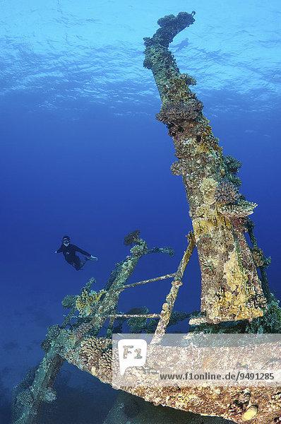 Freitaucher taucht am Wrack der Gianis D  Rotes Meer  Scharm El-Scheich  Ägypten  Afrika