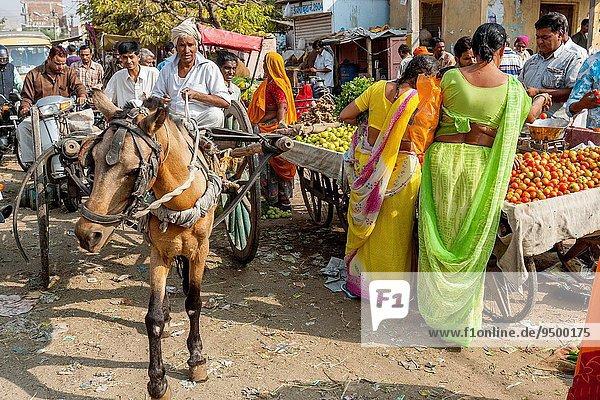 Indien Jaipur Rajasthan