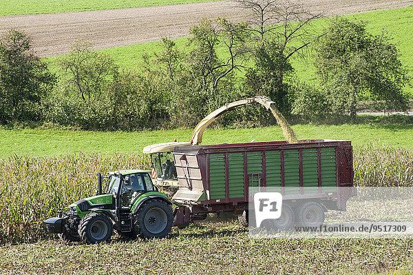 Maisernte für Biogasanlage  Königsberg  Unterfranken  Bayern  Deutschland  Europa