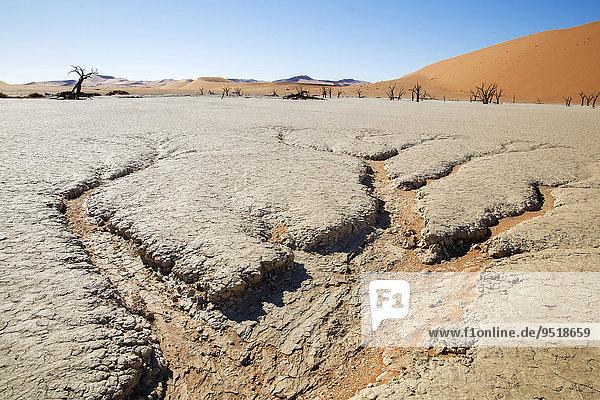 Ausgetrocknete Erde und abgestorbene Bäume  Deadvlei  Sossusvlei  Namibia  Afrika