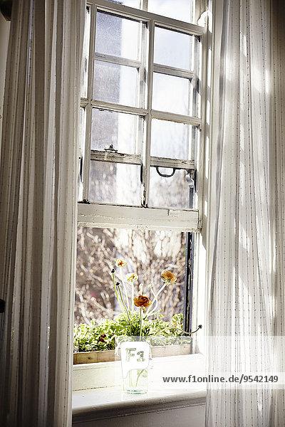 Fenster mit Mohnblumen in der Vase Fenster mit Mohnblumen in der Vase