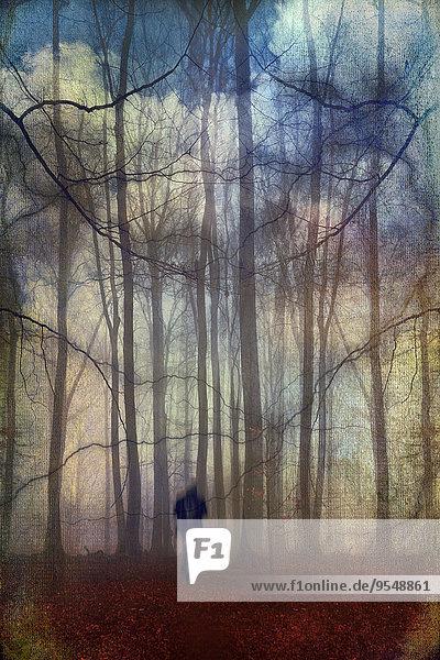 Mann wandert durch fantastische Waldlandschaft