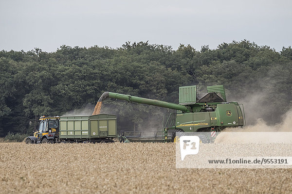 Germany  Lower saxony  combine harvester at work