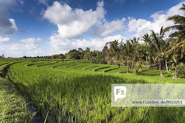 Indonesien  Bali  Blick auf Reisfelder