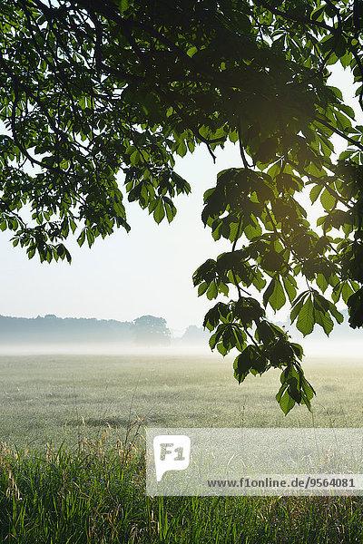 Europa Morgen Baum Dunst Feld Ast Kastanie Deutschland Hessen