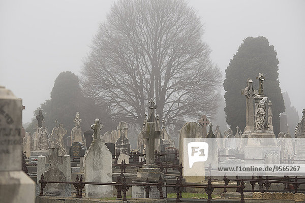 Grabsteine auf dem Friedhof gegen Bäume in Melbourne  Victoria  Australien