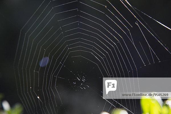 Nahaufnahme des Spinnennetzes
