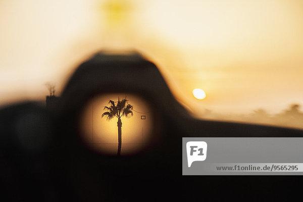 Palme bei Sonnenuntergang durchs Loch gesehen