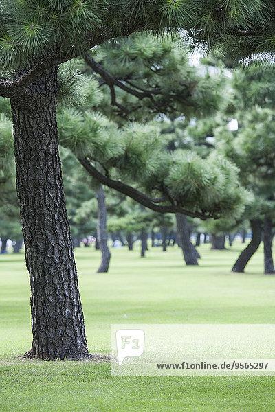 Bäume auf grasbewachsenem Feld