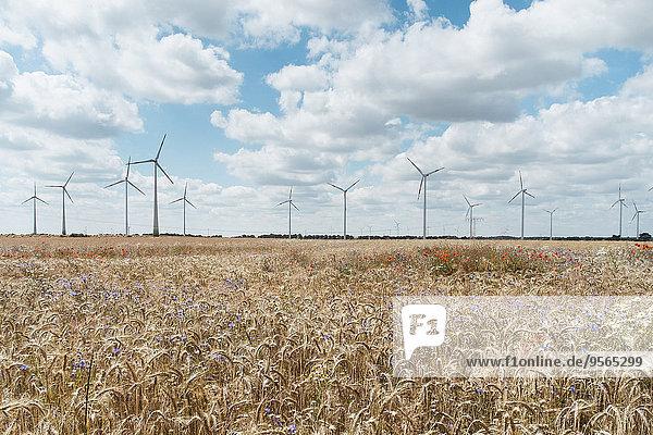 Anbau im Bauernhof gegen Windmühlen