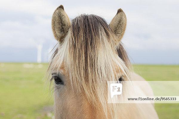 Nahaufnahme des Pferdevorlochs