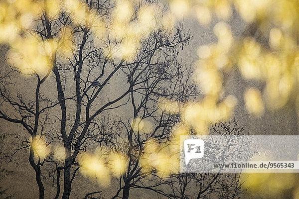 Nackter Baum in der Dämmerung