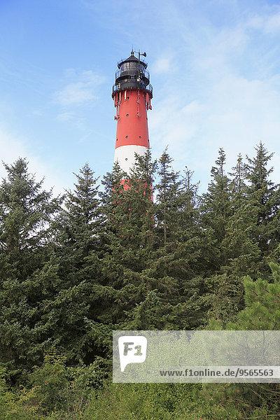 Bäume gegen Leuchtturm