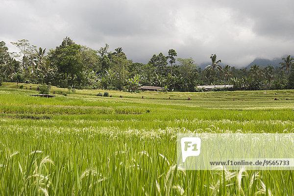 Panoramablick Reisterrasse gegen bewölkten Himmel