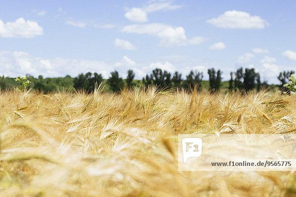 Landwirtschaftliches Feld gegen bewölkten Himmel