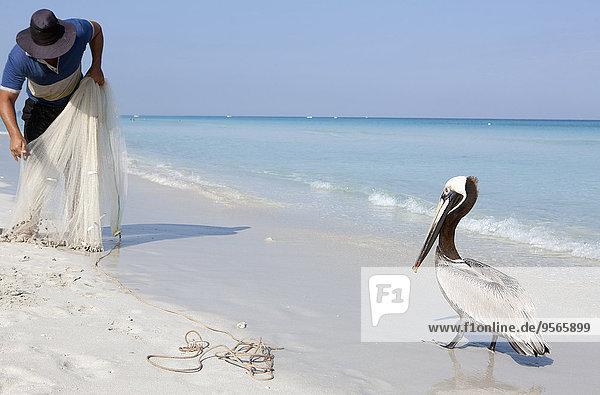 Pelikan vor Fischer am Meer