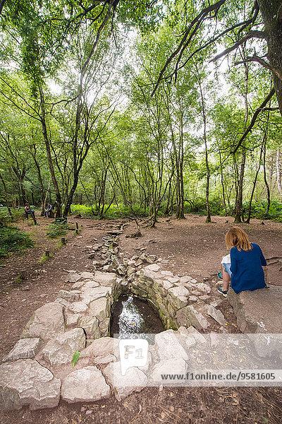 Springbrunnen Brunnen Fontäne Fontänen Wald Bretagne Zierbrunnen Brunnen