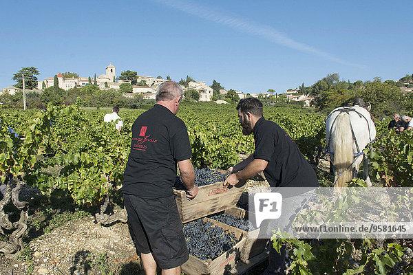 Frankreich Organisation organisieren Tradition Wohngebäude ernten Weintraube