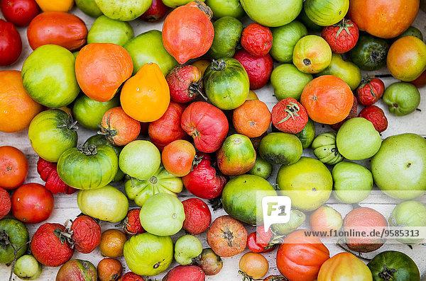 Fülle Vielfalt Close-up Tomate