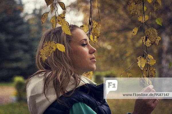 Europäer Frau gehen Baum unterhalb Laub