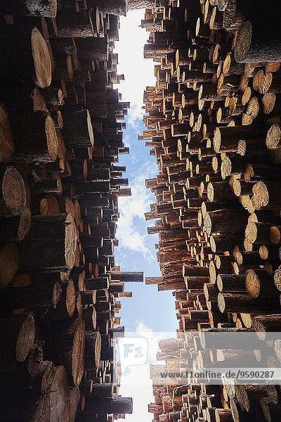 Niederwinkelansicht von gestapelten Hölzern im Holzplatz Niederwinkelansicht von gestapelten Hölzern im Holzplatz